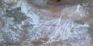 mérule-sur-bois