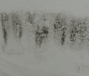 tache noire sur mur de cave humide